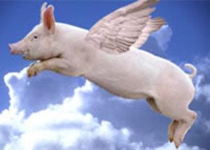 Flyingpigsmall